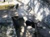 medvěd na zámku Konopiště